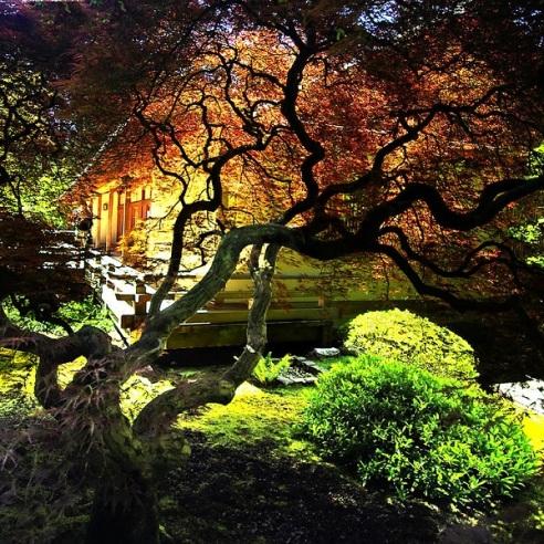portlands-japanese-garden-evening