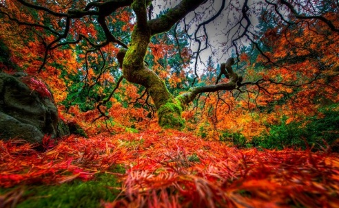 portlands-japanese-gardens-colorful-maple-tree