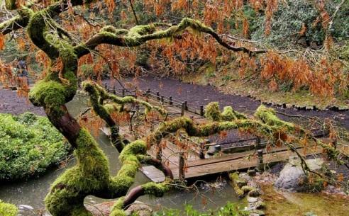 portlands-japanese-gardens-in-fall