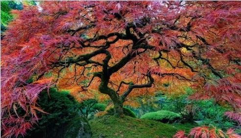 portlands-japanese-gardens